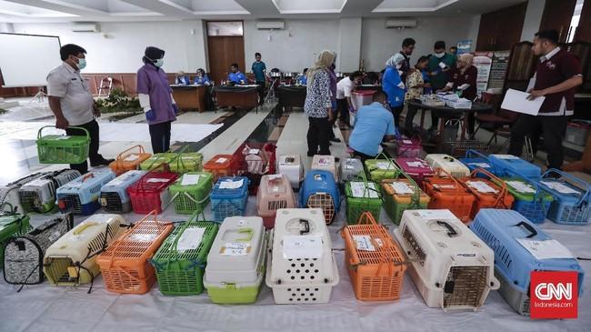 Ada 130 kucing jantan piaraan milik warga mendapat giliran sterilisasi secara gratis dengan cara mendaftar langsung. CNNIndonesia/Safir Makki