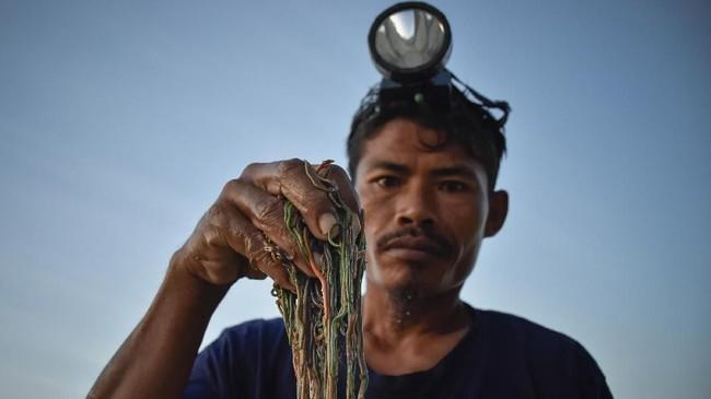 Seorangwarga menunjukkan nyaleatau cacing laut warna-warni pada Festival Pesona Bau Nyale 2019 di pantai Seger Kawasan Ekonomi Khusus (KEK) Mandalika di Kuta, Praya, Lombok Tengah, NTB, Senin (25/2). (ANTARA FOTO/Ahmad Subaidi)