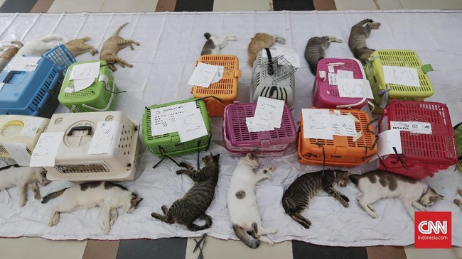 Kucing yang selesai menjalani operasi dan belum sadar diletakan berbaris sesuai urutan dan kandang pemiliknya. CNNIndonesia/Safir Makki