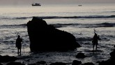 Dua orang Rato memanggil nyale di pesisir laut di desa Hupumada dan Taramanu Kecamatan Wannokaka, Kabupaen Sumba Barat, NTT, Selasa (26/2). (ANTARA FOTO/Kornelis Kaha)
