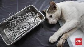 'KPK' Ajak Warga Setop Siksa Kucing