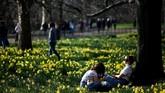 Dengan dimulainya musim semi, bunga-bunga cantik yang tumbuh di sekitar Taman St James juga mulai bermekaran. (REUTERS/Henry Nicholls)