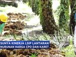 Mendungnya Kinerja Dua Emiten Perkebunan Grup Salim