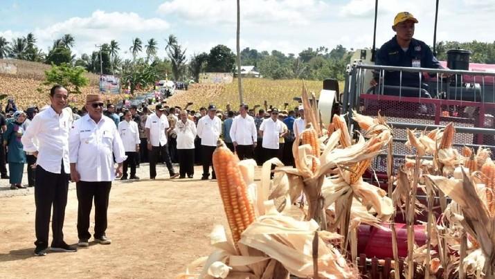 Jokowi Ungkap Penyebab RI Harus Impor Jagung