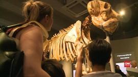 VIDEO: Myanmar Buka Museum Gajah