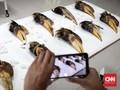 Google Buat Layanan Wildlife Insight, Bisa Pantau Satwa Liar