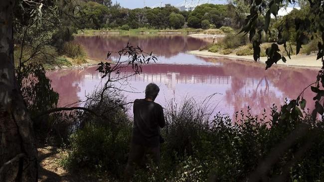 Danau Westgate Park di Melbourne, Australia, berubah warna menjadi merah muda karena meningkatnya kandungan garam dalam airnya. (AFP/William West)