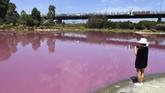Meningkatnya kandungan garam dan naiknya suhu udara membuat alga hijau yang berhabitat di dasar Danau Westgate Park berubah warna menjadi merah muda. (AFP/William West)