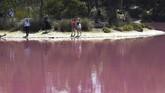 Fenomena berubahnya warna Danau Westgate Park ini juga disebabkan oleh naiknya suhu udara di sekitar karawannya. (AFP/William West)