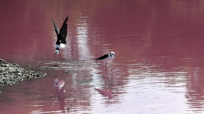 Pengelola juga mengatakan kalau warna air danau akan kembali berubah jernih jika musim hujan tiba. (AFP/William West)