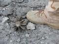 Bom Ditemukan di Lokasi Syuting Film Terbaru Marvel