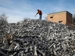 Gegara Gunung Tulang Sapi di Serbia, Bau Busuk Tercium 10 Km