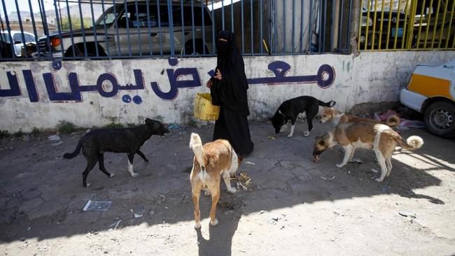 Faktor utama penyebaran rabies di Yaman adalah anjing liar. (REUTERS/Mohamed al-Sayaghi)