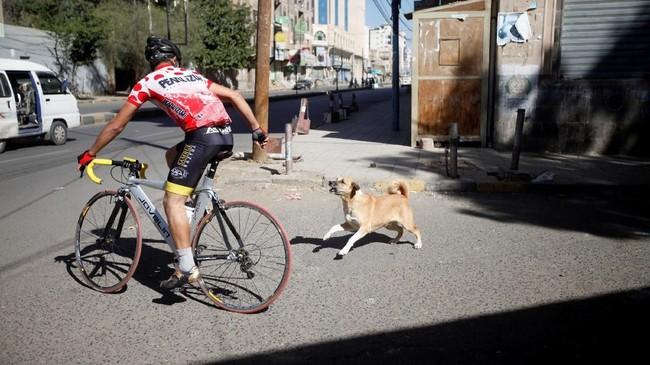 Di 2011 lalu, Yaman melaporkan ada 228 kasus rabies anjing. (REUTERS/Mohamed al-Sayaghi)