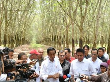 Harga Karet Turun, Jokowi Minta Daerah Jadikan Campuran Aspal