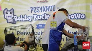 Bentuk Citra Prabowo, Relawan Lomba Kucing Mirip Bobby