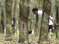 Petani, Riwayatmu Dalam Reforma Agraria Ala Jokowi