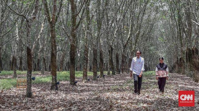 Jokowi Beri Sinyal Pindah Ibu Kota ke Kalimantan