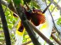 10 Jenis Burung Spesies Baru Ditemukan di Sulawesi dan Maluku