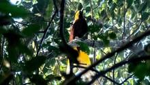 Berjalan Vertikal Demi Bersua 'Burung Surga'