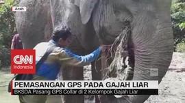 Pemasangan GPS pada Gajah di Aceh