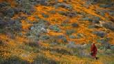 Tak hanya sekadar menyaksikan, banyak juga yang mengabadikan dirinya untuk tenggelam di antara kerumunan bunga tersebut. (Maro SIRANOSIAN/ AFP)