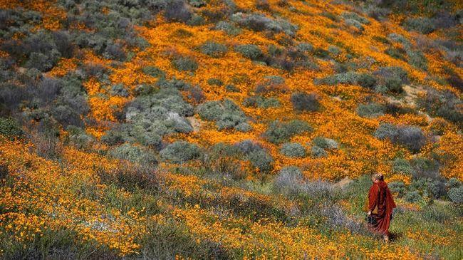 Musim Mekar Bunga di California Terlihat sampai Luar Angkasa