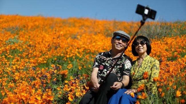 Pada dasarnya Poppy adalah tumbuhan herbal yang kerap ditanam karena bunganya berwarna-warni. (REUTERS/Lucy Nicholson)