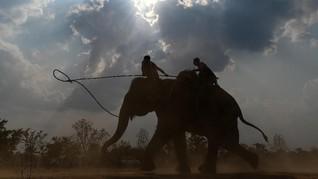 FOTO: Balap Gajah ala Vietnam