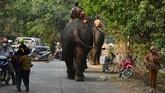 Untuk itu Animals Asia memperkenalkan program tur melihat gajah yang beretika dan pastinya tida menyiksa hewan