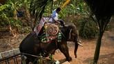 Seorang warga Vietnam, Mahout Y Hoi Bya, mengendarai gajahnya bernama Kham Sinh dalam ajang balap gajah legendaris di Vietnam.