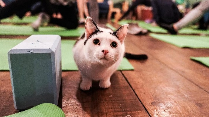Seekor kucing duduk di lantai selama kelas yoga kucing di kafe kucing Brooklyn di Brooklyn, New York, AS (REUTERS / Jeenah Moon)