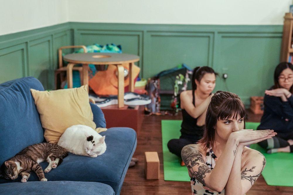 Sebuah kafe Brooklyn di Brooklyn New York, Amerika Serikat memiliki inovasi dalam olahraga yaitu yoga kucing, dimana seseorang berolahraga ditemani dengan kucing-kucing yang menggemaskan. (REUTERS / Jeenah Moon)