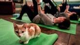 Kucing tak cuma sekadar jadi hewan yang menggemaskan dan menyenangkan untuk dipeluk. (REUTERS/Jeenah Moon)