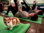 Meoww, Begini Rasanya Yoga Sambil Main dengan Kucing!