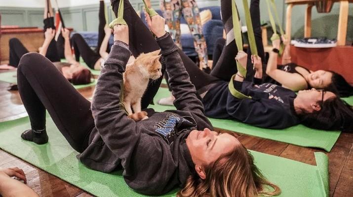 Seekor kucing duduk di Meaghan Brosnan selama kelas yoga kucing di kafe kucing Brooklyn di Brooklyn, New York, AS (REUTERS / Jeenah Moon)