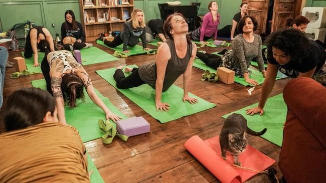 Kucing sekarang ini juga jadi hewan yang bisa membantu Anda saat yoga. (REUTERS/Jeenah Moon)