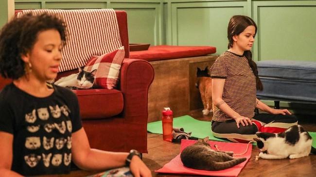 Setelah yoga kambing dan anjing populer beberapa waktu lalu, kini saatnya yoga bersama kucing. (REUTERS/Jeenah Moon)