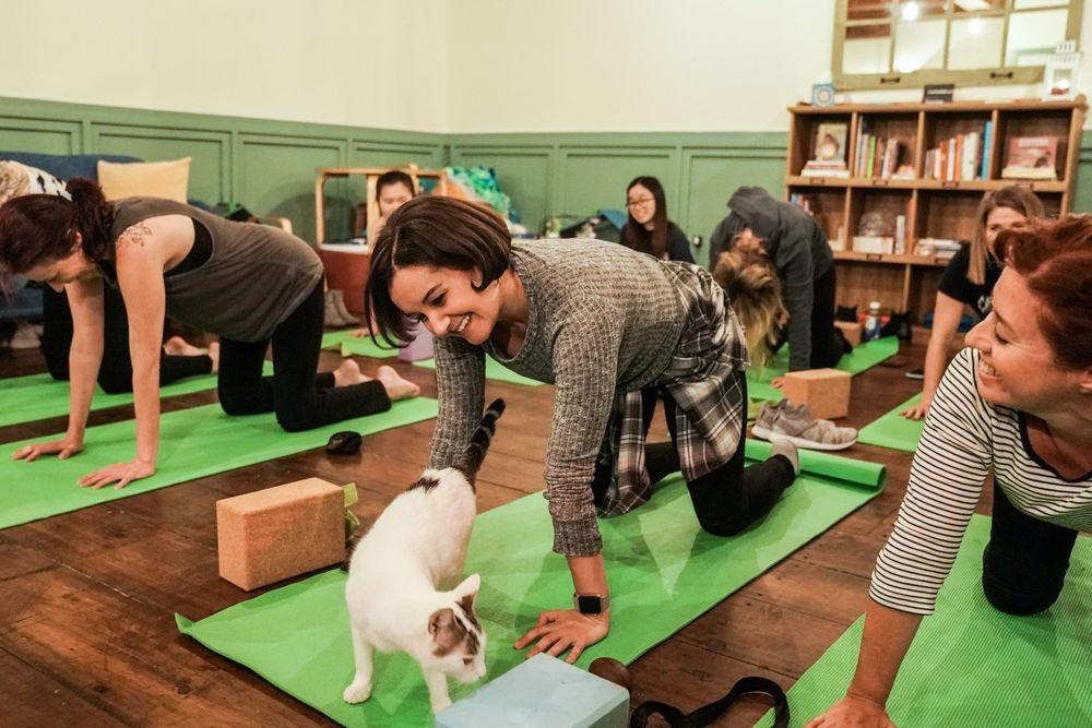Para wanita melakukan meditasi yoga seperti olahraga yoga biasanya, namun anda juga bisa sambil bermain dengan kucing yang lucu. (REUTERS / Jeenah Moon)