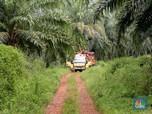 Ekspor Minyak Sawit Malaysia Diramal Anjlok, Harga CPO Turun
