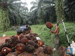 Harga Terus Meroket, Saatnya Borong Saham Produsen CPO?