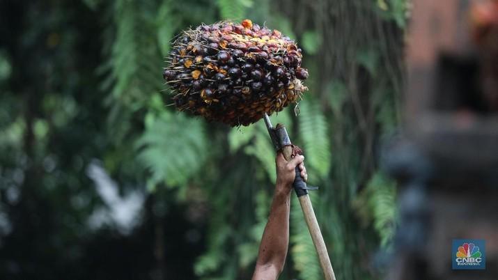 Harga minyak sawit mentah (crude palm oil/CPO) dalam tren koreksi. Namun, masih ada harapan harga naik.