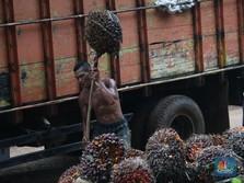 Menko Darmin: Industri Sawit RI Pekerjakan 17,5 Juta Orang