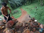 Minyak Kedelai Naik, Harga CPO Jadi Ikut Menguat