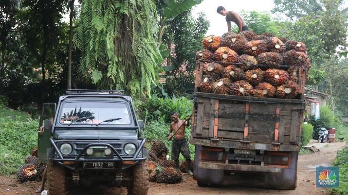 Setelah sempat anjlok 2%, harga minyak kelapa sawit mentah (crude palm oil/CPO) berbalik arah menguat.
