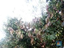 Obral Impor Kakao, Airlangga Usul PPN Dihapus