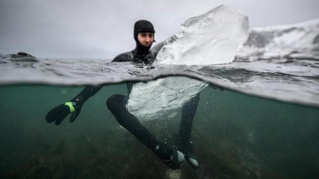 Sulit untuk membawanya ke garis pantai, sehingga butuh dua sampai tiga orang untuk membopongnya. (Olivier MORIN / AFP)