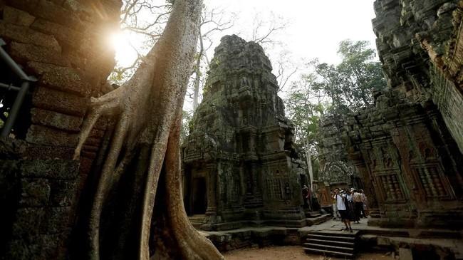 Ketika Angkor ditemukan kembali di awal abad ke-20 oleh para arkeolog Prancis, semua kuil telah dirambati tanaman. (REUTERS/Samrang Pring)