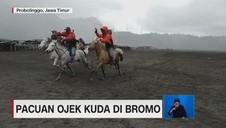 Pacuan Ojek Kuda di Bromo