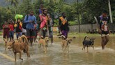 Warga mengungsi akibat banjir bandang di Sentani Jayapura, Papua, Senin (18/3). Hingga Selasa (19/3) BNPB mencatat setidaknya 89 warga meninggal akibat banjir yang menerjang Sentani. ANTARA FOTO/Gusti Tanati
